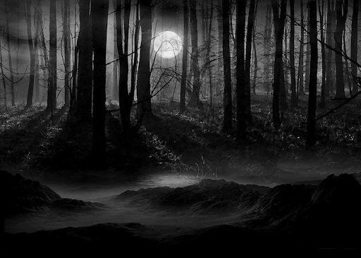 spooky woods at night with moon and mist